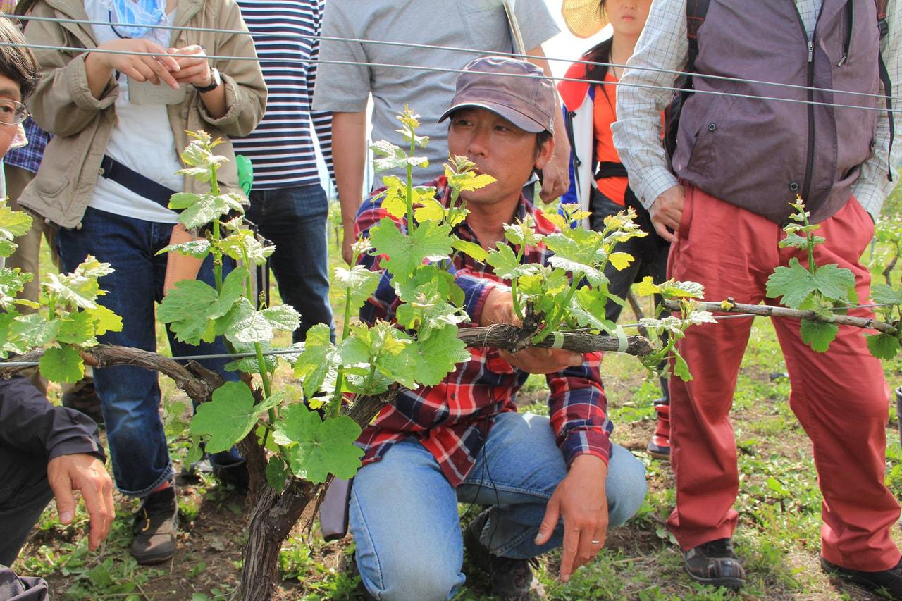 Vol.5 最終目標をワイン造りに見据えてぶどう栽培を学ぶ
