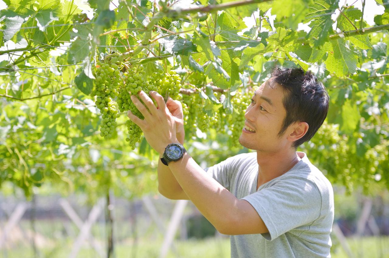vol.23 Aperture Farm<br>田辺 良さん<br><br>ビオに近いやり方で<br>自分らしいワインを