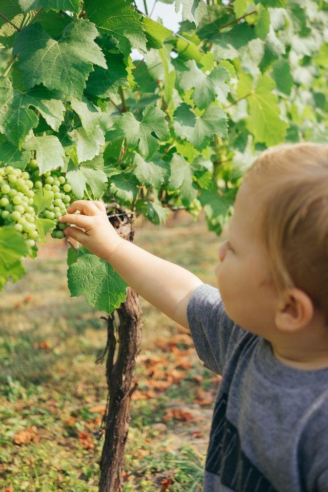 長野ワイントラベルが千曲川ワインバレーを巡る、ワイナリー&グルメマップの予約販売開始!