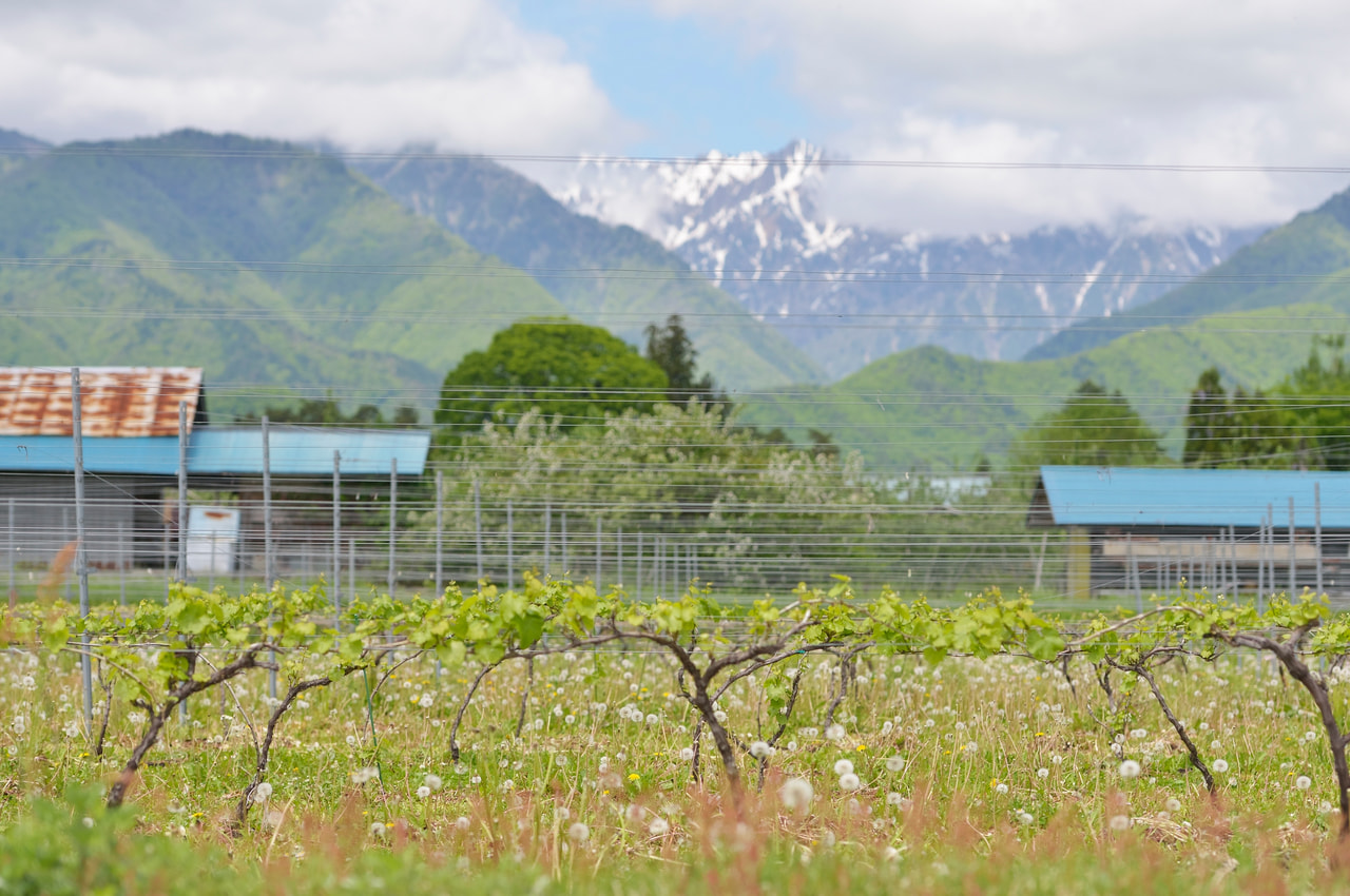 NAGANO WINE も味わえる 快速「いろどり北アルプス山麓味覚号」