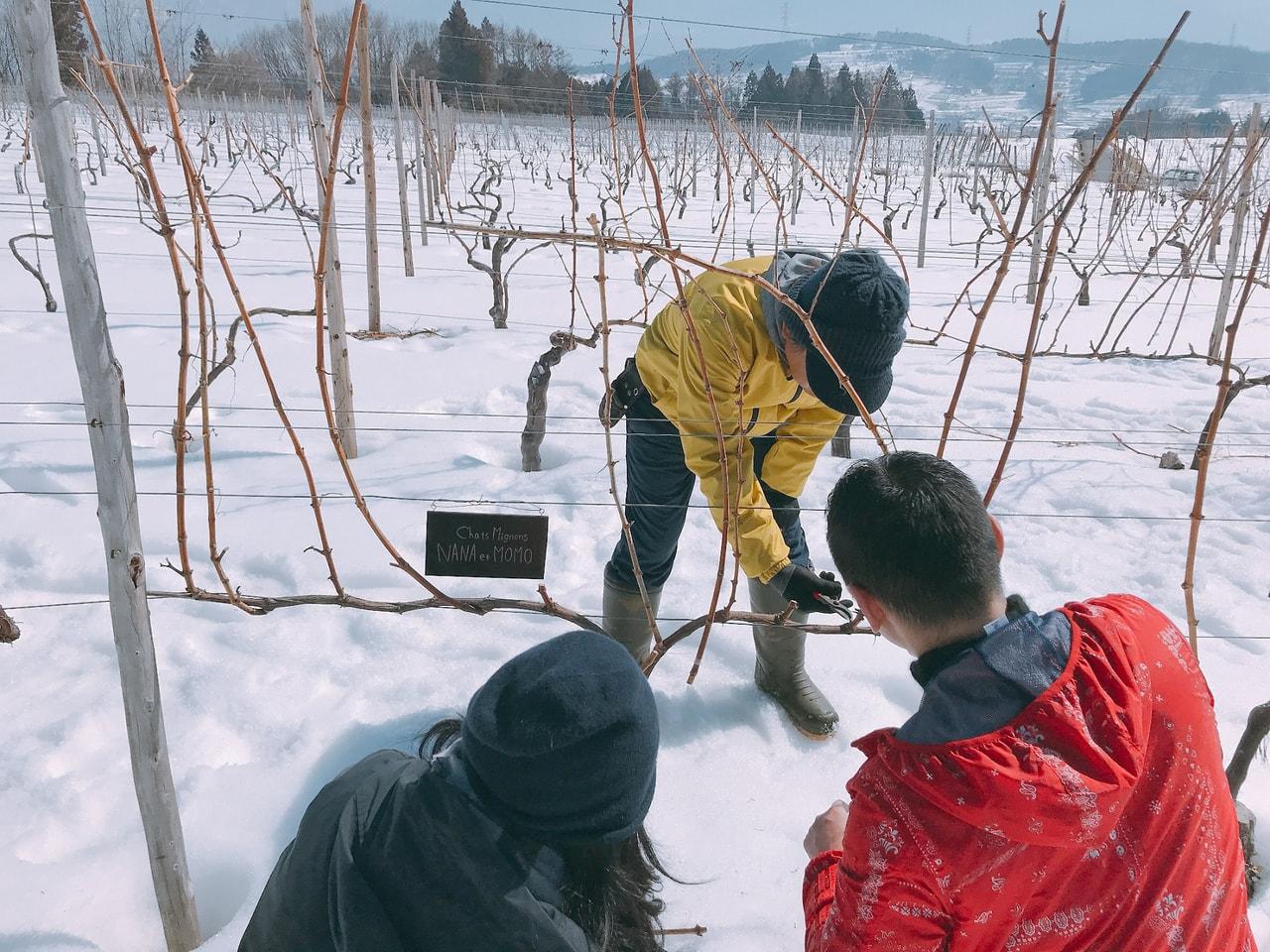 2020ワイナリーの四季まるごと体験ツアー  第1回・早春編 (飯綱町)