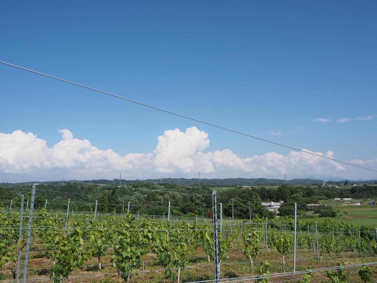 千曲川ワインバレー奇行、クラウドファンディング始まりました