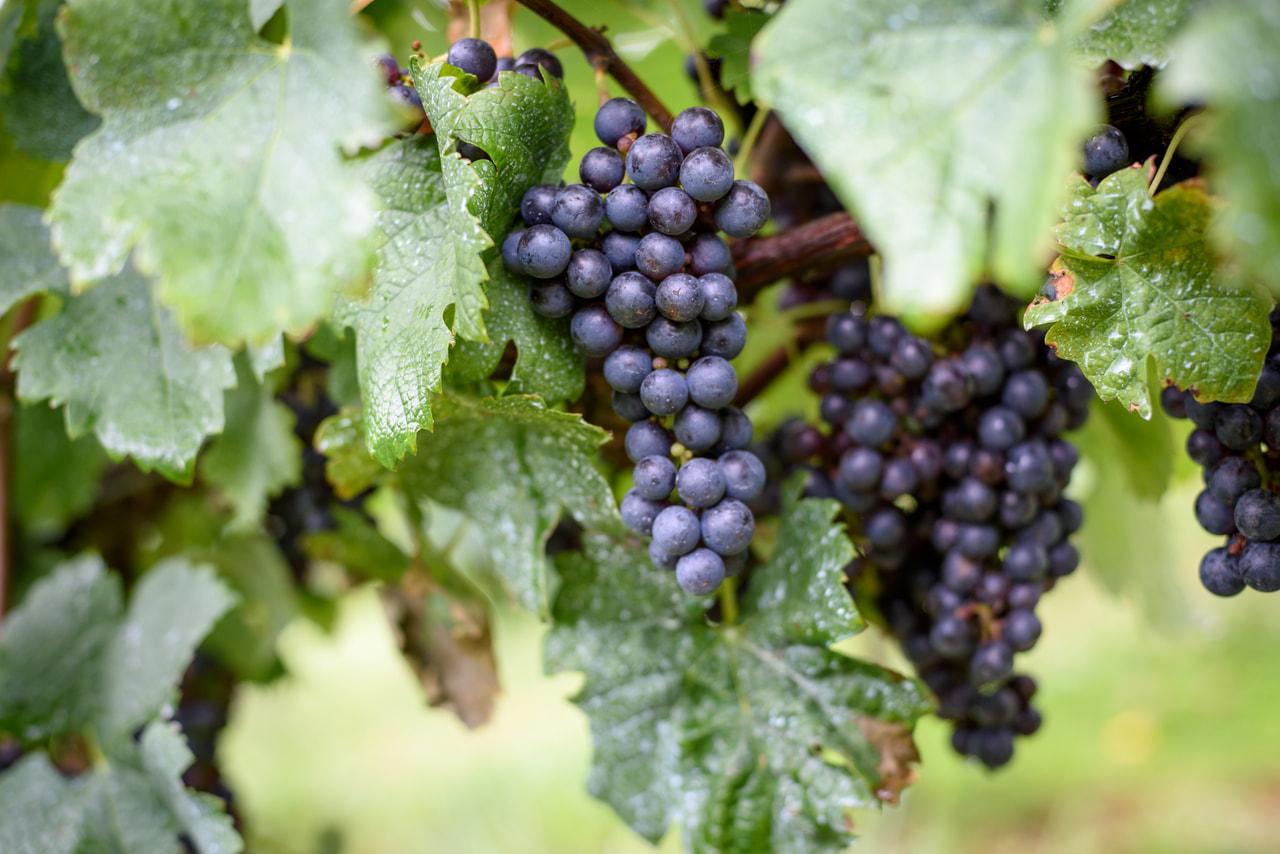 オーベルジュ ドゥ シェ・マリーに、ワインコンシェルジュルームがオープン