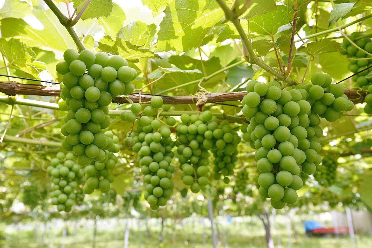 塩尻市が「アペリティフの日 in名古屋」でワインバーをオープン