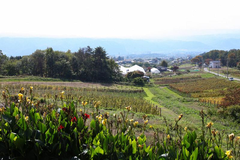 自然派を識る ワインと食のツアー