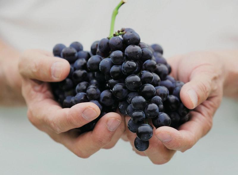 GI長野初認定! 長野県原産地呼称管理制度 認定ワインのおしらせ