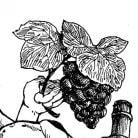 Nagomi Vineyards