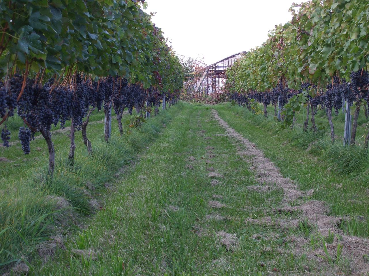 Kido Winery