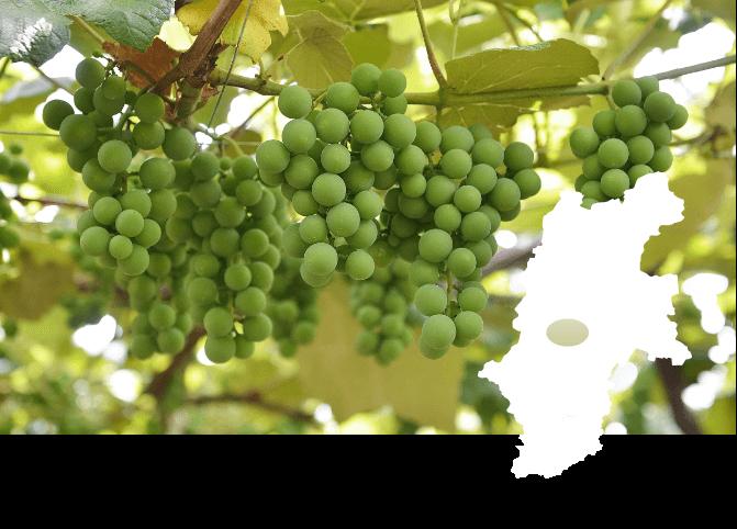 桔梗ヶ原ワインバレー