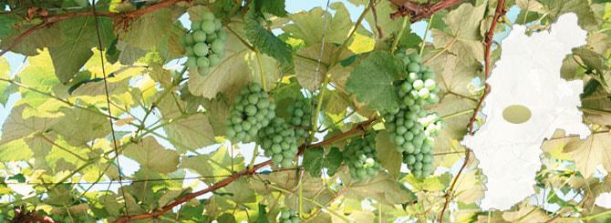 Kikyogahara Wine Valley